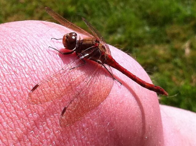 Dragonfly on knee.